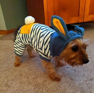 Bunny Outfit!